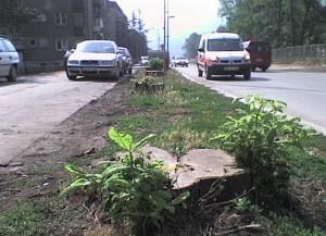 7dana.info » Gdje su nestala posječena stabla kestena? | Zenica News | Scoop.it