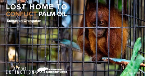 Add your name: Tell palm oil companies to halt the destruction of the Leuser Ecosystem | Our Evolving Earth | Scoop.it