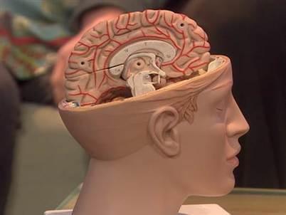 Meet the girl with half a brain | Psykologia, sen tutkimus ja soveltaminen | Scoop.it