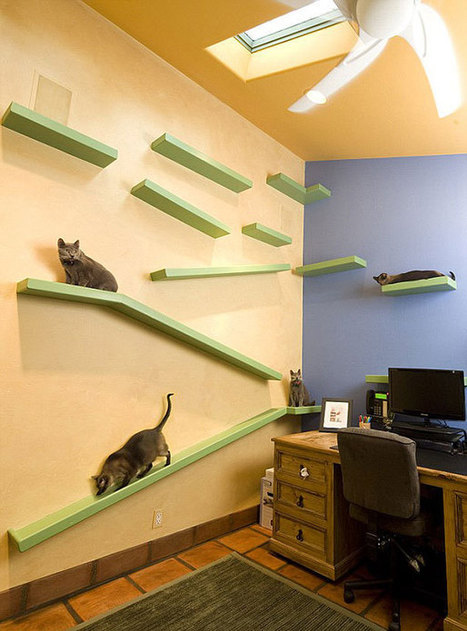 Man Spends $35,000 To Turn His House Into The Playground For His 18 Cats | 16s3d: Bestioles, opinions & pétitions | Scoop.it