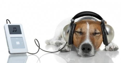 El efecto de la música en los animales | Juegos Tic para Música Primaria | Scoop.it