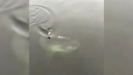 Video of large fish swimming through Bedford Basin goes viral | Bedford, NS | Scoop.it