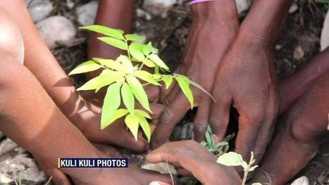 Moringa tree leaves from Africa help curb malnutrition | Vertical Farm - Food Factory | Scoop.it