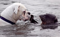 God's Animals! A SEAL SAVES THE LIFE OF A DOG IN WATER | The Official GODrive Media SCOOP! | Scoop.it