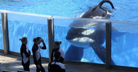 SeaWorld to phase out killer whale shows, captivity | Plant Based Transitions | Scoop.it