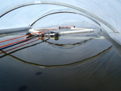 Explainer: what are algal biofuels? | Biogas | Scoop.it
