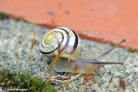 Le comptage des escargots de votre jardin, c'est cet été... - Le JardinOscope, toute la vie animale de nos parcs et jardins | pour mon jardin | Scoop.it