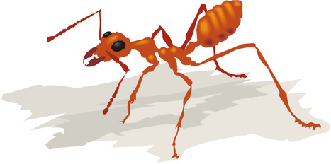 AntWeb: Online database of images, specimen records, and natural history information on ants | All About Ants | Scoop.it