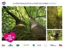 Elisez votre arbre - Materiel & Paysage | Cahier des Architectes | Scoop.it
