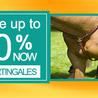 Equestrian Clearance Horse Equipment & Equestrian Products