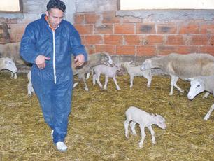 Le virus de Schmallenberg gagne du terrain   Agriculture en Dordogne   Scoop.it