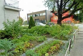 Décryptage : des potagers partagés au ras du bitume | Les colocs du jardin | Scoop.it