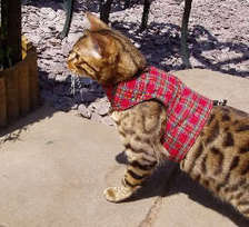 Walking Jackets for your cat   Dog Products   Scoop.it