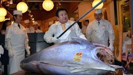 Un thon rouge de 222 kilos vendu 1,38 million d'euros - 7SUR7.be | SUSHIJU | Scoop.it