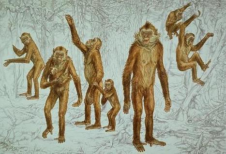 Una mano casi humana... de hace 7 millones de años | Historia e Tecnologia | Scoop.it