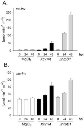 PLOS ONE: Regulation of Cell Wall-Bound Invertase in Pepper Leaves by Xanthomonas campestris pv. vesicatoria Type Three Effectors (2012) | Effectors and Plant Immunity | Scoop.it