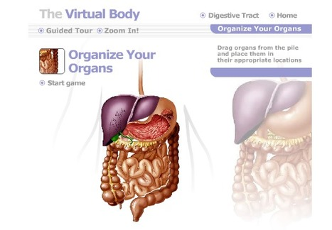 ehc.com Corporate Site - Virtual Body | Education Technology @ NWR7 | Scoop.it