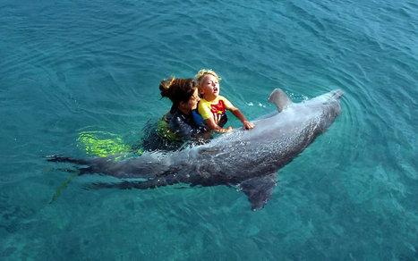 Lori Marino – Dolphins are not healers   Animals in captivity - Zoo, circus, marine park, etc..   Scoop.it