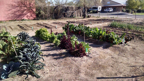 Arizona Gardeners: Time to prepare for fall growing season   CALS in the News   Scoop.it