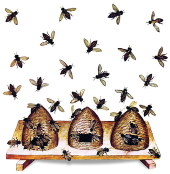 Apiculture: Telling the bees : Nature   MycorWeb Plant-Microbe Interactions   Scoop.it