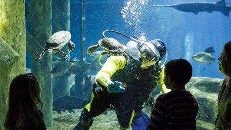 Tennessee Aquarium partners with DEMA for scuba diving event | ScubaObsessed | Scoop.it