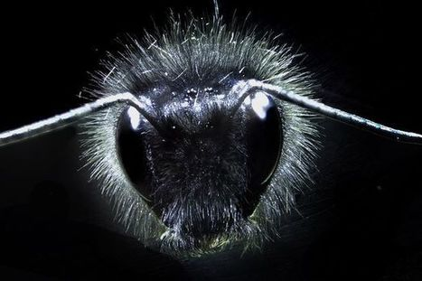 Bees can sense pollen by electric fields that flowers transmit | OrganicNews | Scoop.it