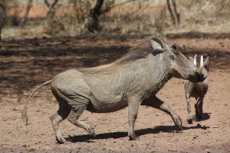Poľovnícky zájazd v južnej Afrike | Favorite blog posts | Scoop.it