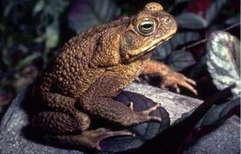 Florida pet owners warned about deadly giant toads | Small Biz is my big biz | Scoop.it
