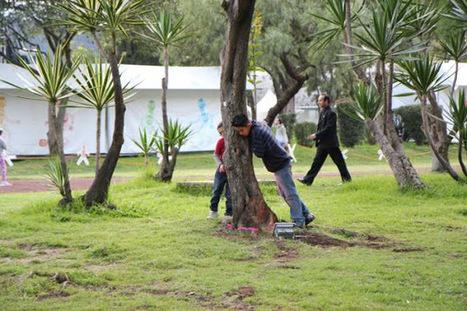 The Listen Tree Project | Documentary Evolution | Scoop.it