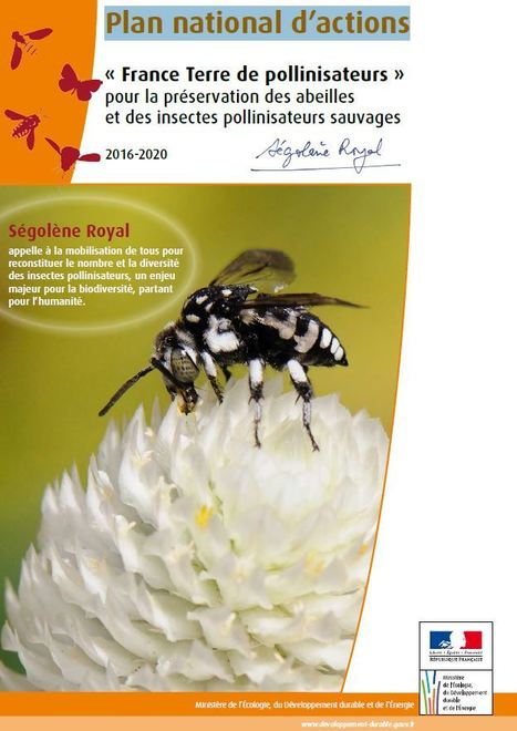 Plan national d'actions 2016-2020 en faveur des insectes pollinisateurs sauvages | Insect Archive | Scoop.it