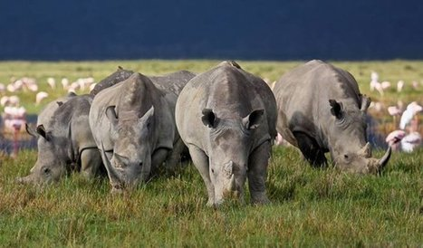 World rhino day photo competition winners! - Africa Geographic Blog | Everything Photographic | Scoop.it