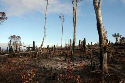 Tropical forests in trouble in SE Asia, west Africa: analysts | GarryRogers NatCon News | Scoop.it