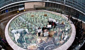 Sondage mondiale sur Avaaz.org! | CADRES SENIORS ET CHEFS D'ENTREPRISE EN REBOND | Scoop.it