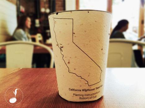 Primera taza de café del mundo que se planta y repone la flora local / EcoInventos.com | Innovacion social y tecnologica | Scoop.it