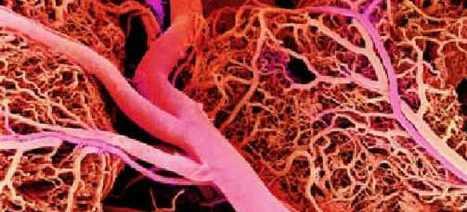 Los vasos sanguíneos de la retina indican el nivel de inteligencia y la salud de nuestra función cognitiva   Noticias   Tendencias 21   CIENCIA Y SALUD   Scoop.it