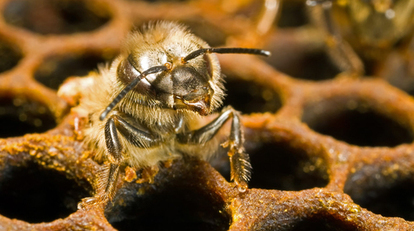 Center for Food Safety | Blog | A Sticky Situation for EPA on Pollinators and Pesticides | GarryRogers NatCon News | Scoop.it