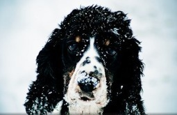 Punish Alleged Puppy Mill That Left Animals Out in the Cold   GarryRogers Biosphere News   Scoop.it