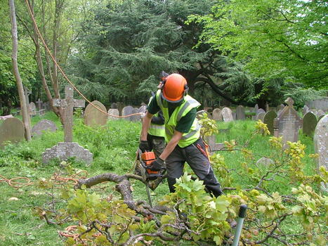 Benefits From a Tree Surgeon | Superior Garden Related Services In UK | Scoop.it