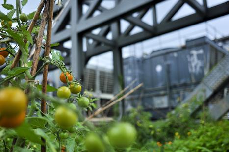 Intégrer la biodiversité dans les logements soc... | Le Petit Jardinier Urbain | Scoop.it