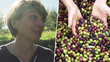 Ce couple a changé de vie pour cultiver des olives bio dans le sud de la France | Territoires en transition, ESS et circuits courts | Scoop.it