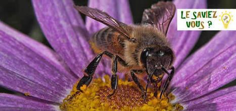 35 % de la nourriture mondiale existe grâce aux abeilles - | Biodiversité & Relations Homme - Nature - Environnement : Un Scoop.it du Muséum de Toulouse | Scoop.it