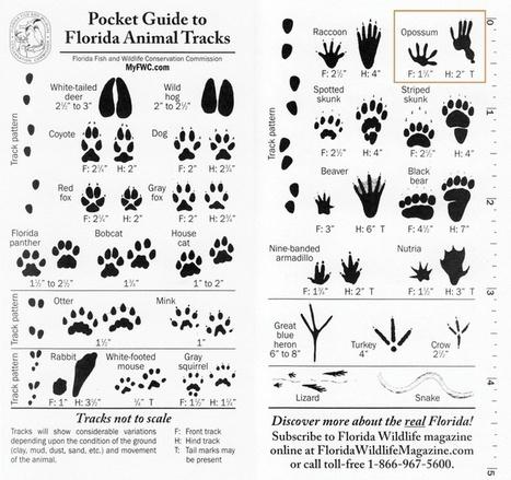 Florida's Wildlife and Plant Guide Links | Crow and weasel | Scoop.it