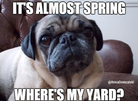 It's Almost Spring. Get Your Dog a Yard!   Bucks County Area Real Estate News   Scoop.it