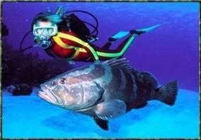 Mahogany bay Honduras | Roatan Honduras Excursions | Scoop.it