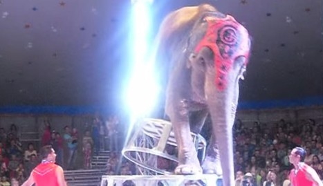 Circus Elephants Rush To Help Friend Who Fell During Cruel Stunt | Nature Animals humankind | Scoop.it