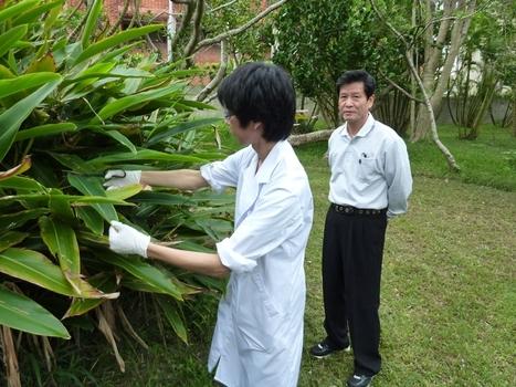 Okinawa -  Vivre plus longtemps | Paratamtam parapharmacie | Scoop.it