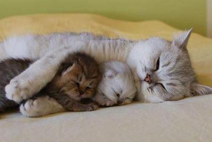 Cuddly Kitties | borstvoeding voeding opvoeding | Scoop.it