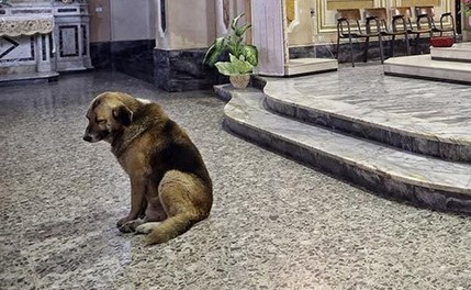 Dog Mourns the Death of His Owner Every Day at Mass - Viral Nova | Pet Health | Scoop.it