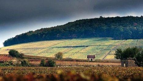 Climats de Bourgogne : des œuvres d'art contemporain à déguster des yeux chez les vignerons | Le Vin et + encore | Scoop.it