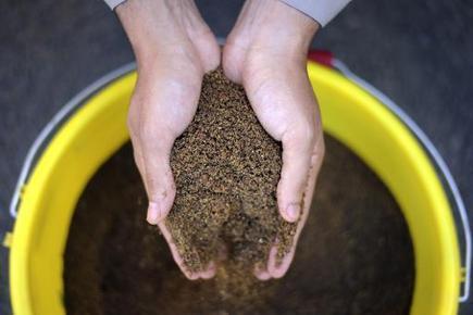 Elevage: du lin et des graines oubliées contre le soja OGM - Magazine GoodPlanet Info | Confidences Canopéennes | Scoop.it